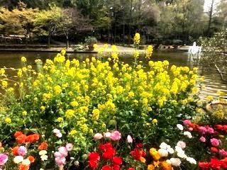 花の歳時記 3月 菜の花